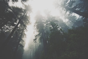 http://huntergreen.org/learn/attachment/deep-foggy-forest/Collection.